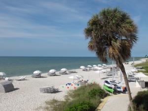 beach-palm